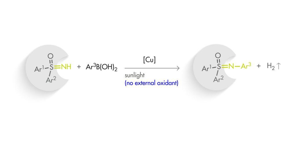 Autocatalytic photoredox Chan–Lam