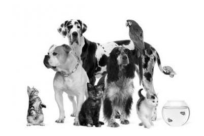 Veterinary market